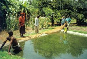 Harambee gwassi kenya opere realizzate for Allevamento pesci